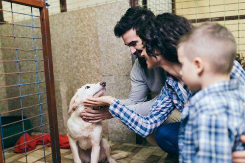 รับดูแลสุนัข